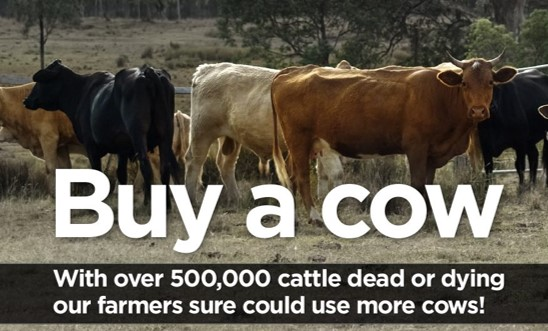 Buy A Cow – Rebuild The Herd
